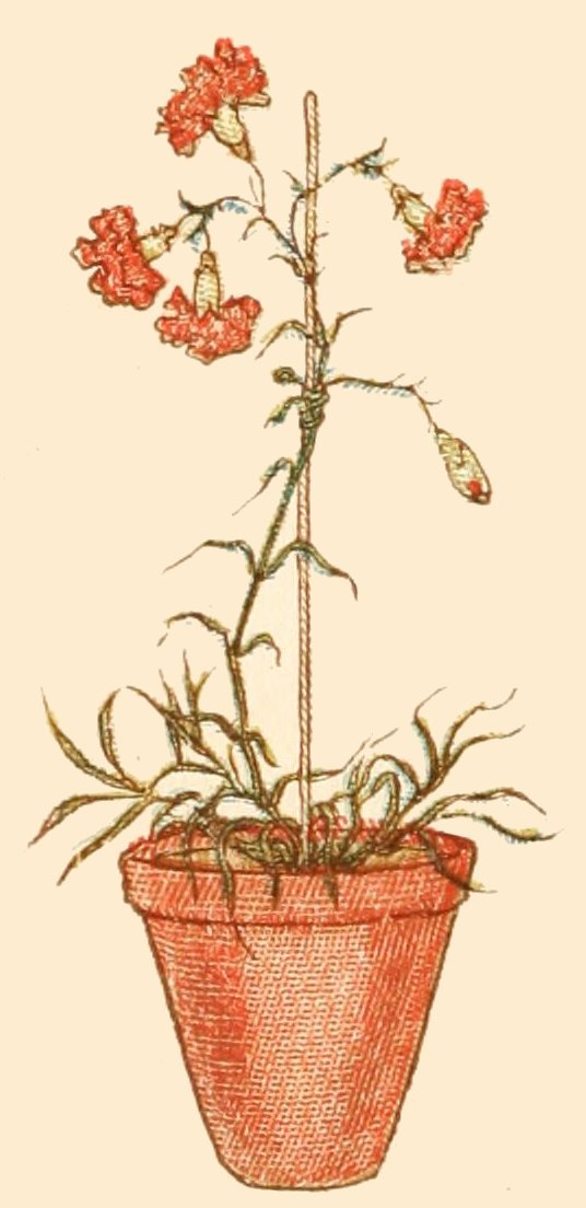carnation in a pot drawing